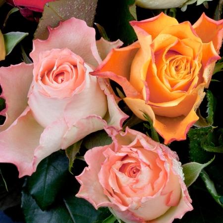 three fresh roses close up photo