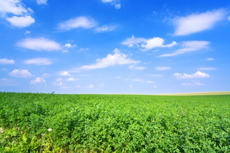 green lucerne field under blue sky in France Stock Photo