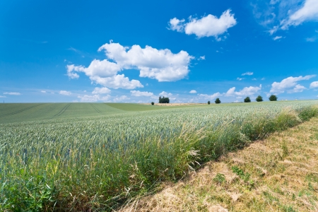 country wheat field in France photo