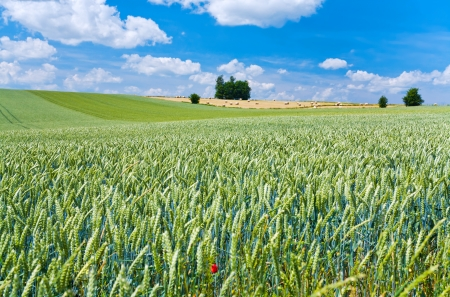 summer country landscape in France Stock Photo - 14005556