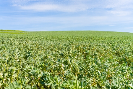 green agricultural field under blue sky in France Stock Photo - 14005545