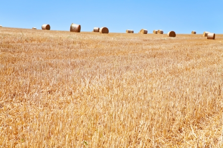 straw field after harvest photo