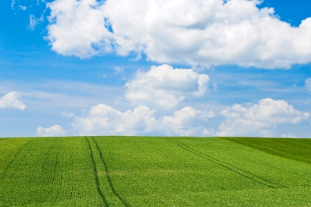 green country field under blue sky with white clouds photo