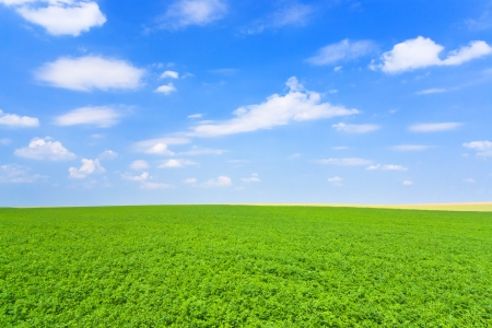 green lucerne field under blue sky in France photo