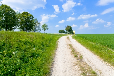 dirt country road along lucerne field under blue sky photo