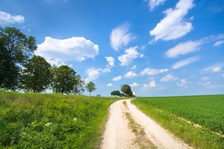 dirt road along lucerne field under blue sky photo
