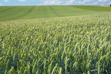 summer country wheat field in France Stock Photo - 14150049