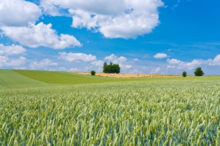 summer country landscape in France photo