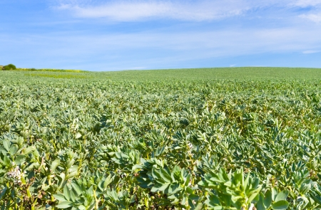 green agricultural field under blue sky in France Stock Photo - 14149749