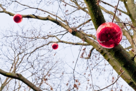 decorative red glass new year baubles on tree outdoor photo