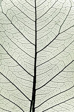 the dry leaves: de fondo de la hoja del �rbol de cerca