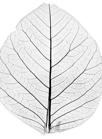 hojas secas: de fondo de la hoja del �rbol de cerca
