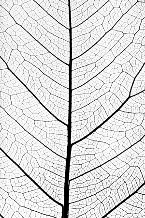 background from tree leaf close up