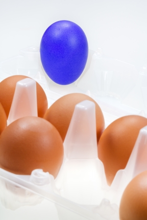 one separate blue hen's egg against several brown eggs Stock Photo - 15317393