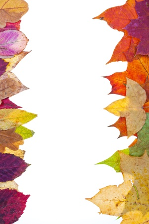 two side frame from motley autumn leaves isolated on white background photo