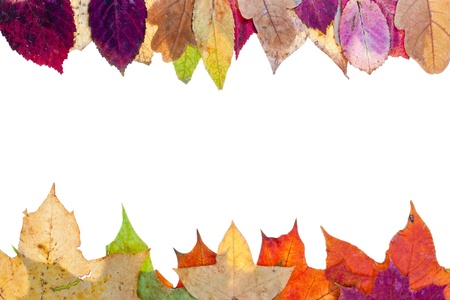 two side frame from multicolored autumn leaves isolated on white background photo