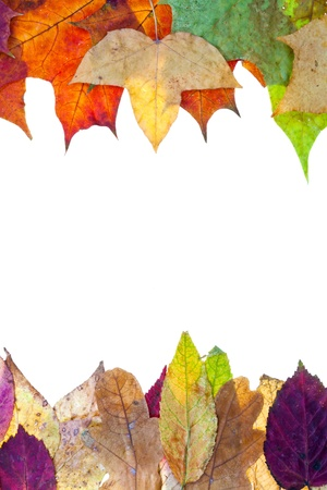 two side frame from autumn leaves isolated on white background Stock Photo - 15653852