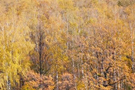 background from yellow fallen trees in autumn forest Stock Photo - 15779193