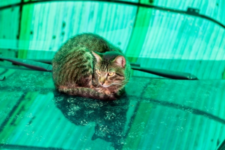 street cat is heating on car hood in autumn day Stock Photo - 15820967