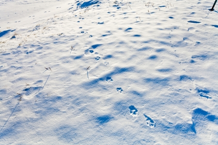 animal footprints on snow in cold winter day photo