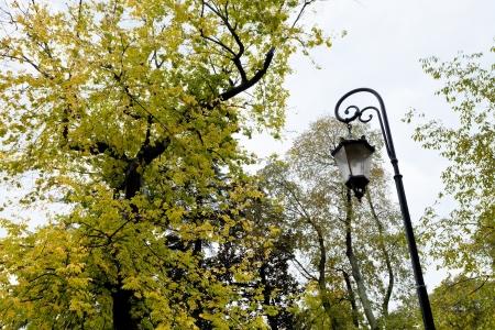 medieval urban lantern and autumn tree in Padua, Italy Stock Photo - 17166748