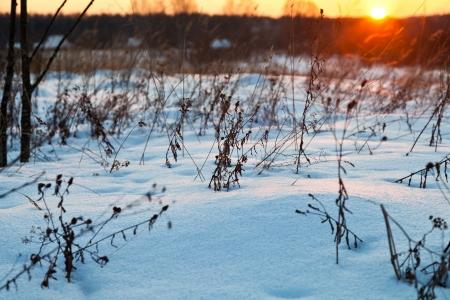 snowdrifts: sunset under blue winter snowdrifts on country field