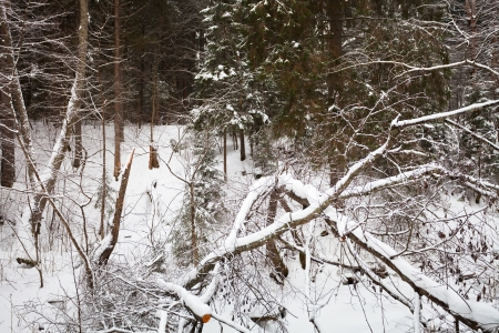 snowy ravine in wild winter forest photo