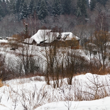 snow covered village on margin of a spruce forest on a winter day photo