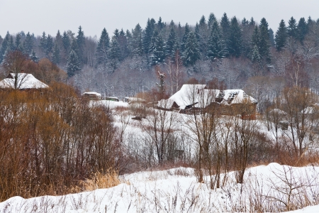 snowy village on margin of a spruce forest on a winter day photo