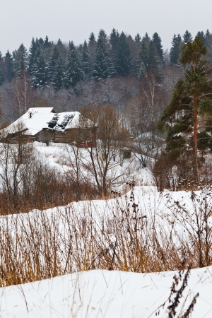 snow covered rural houses on margin of a spruce forest on a winter day photo