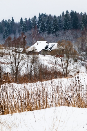 snow covered country houses on margin of a spruce forest on a winter day photo