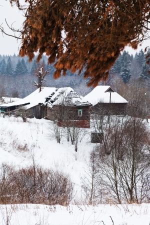 snow covered farmstead on margin of a spruce forest on a winter day photo