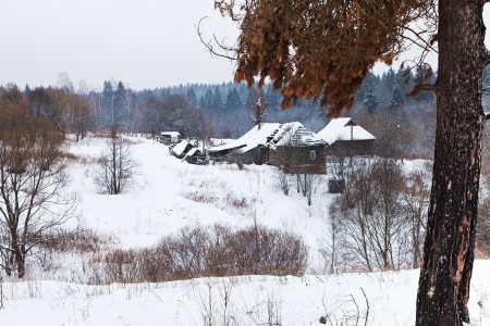 snow covered hamlet on margin of a spruce forest on a winter day photo