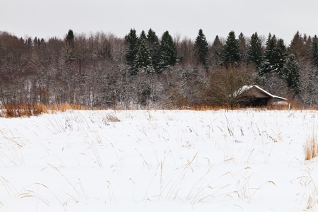 old house on edge of snowed forest in cold winter day photo
