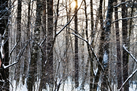 yellow early sunset in winter aspen forest Stock Photo - 17590212