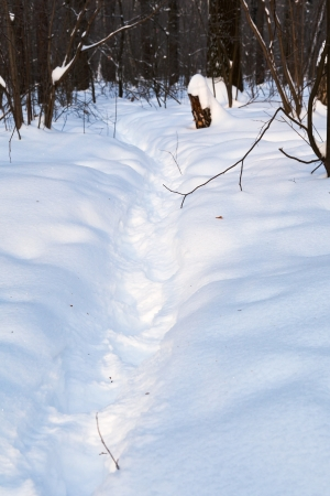 pathway in deep snow at early sunset in winter forest Stock Photo - 17590050
