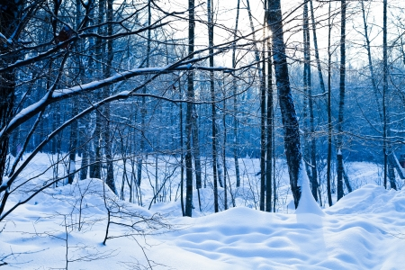cold day in blue frozen winter forest Stock Photo - 17590215