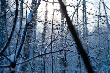 hoarfrost on wood branch in cold winter day Stock Photo - 17590206