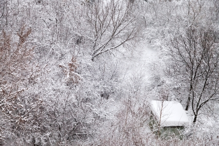 snow-covered shed in winter forest photo