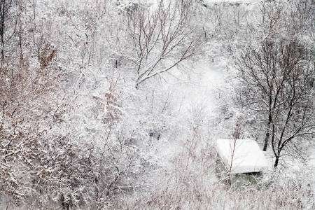 small snow-covered hut in winter forest photo