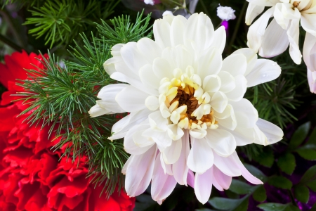 white chrysanthemum in flower bouquet close up photo
