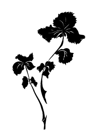 a sprig: sprig of parsley drawn by black ink