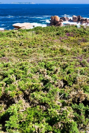 cotes d armor: moorland on the shore of Atlantic Ocean in Brittany, France Stock Photo