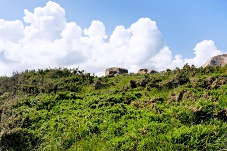 cotes d armor: moorland on a hillside in Brittany in summer day