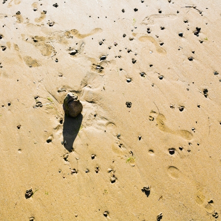 cotes d armor: boulder on sandy beach in sunny day, Brittany, France