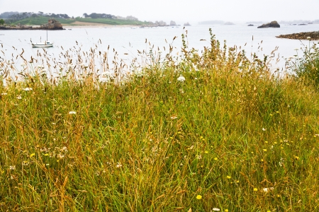 cotes d armor: wild grass close up on Atlantic coast of Cotes D Armor in Brittany, France Stock Photo