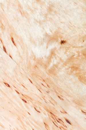 burl wood: background from silver birch wood close up