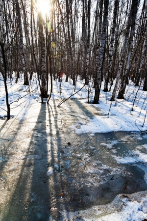 morning sun beams in early spring forest photo
