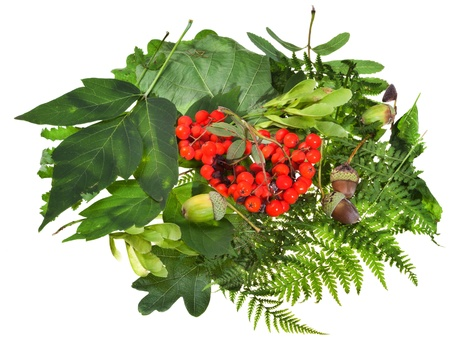floral still life from green leaves, rowan berries and acorns isolated on white background photo