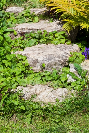 steps overgrown with grass in summer garden photo